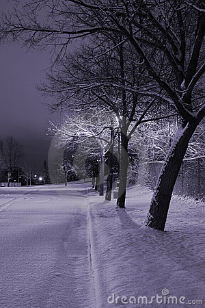 Snowy Trees in a Row in the Park- Winter Theme
