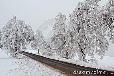 Snowy trees in winter landscape
