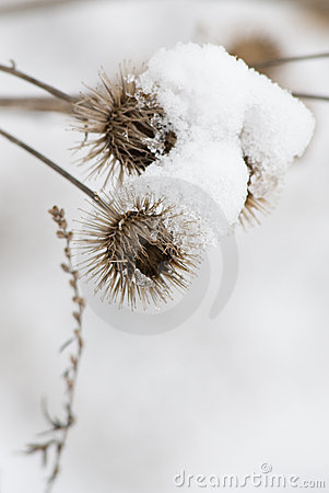 Free Snowy Vegetation Stock Photography - 8653692