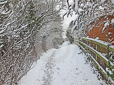 Snow walk through the trees.