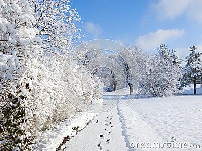 Snowy Walkway