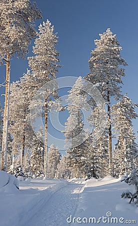 Snowy walkway between trees