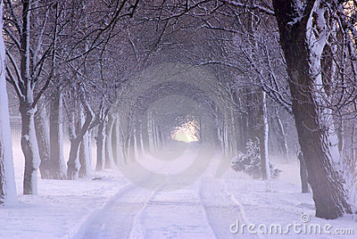 Snowy Winter Alley in Park