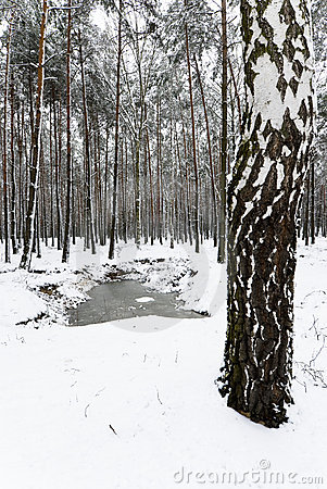 Snowy Winter in the Forest