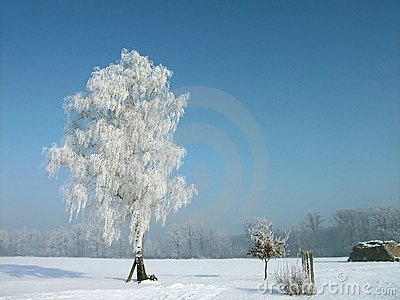 snowy winter, frost covered tree