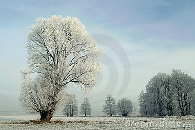 snowy winter landscape, frost covered tree