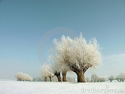 Snowy winter landscape, frost covered trees