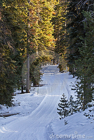 Snowy Winter Road in Forest