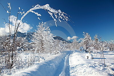 Snowy winter way