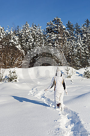 Snowy woodland