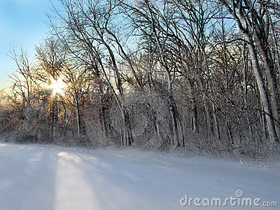 Snowy Woods at Dawn
