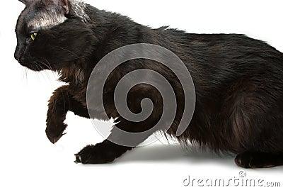 Snuffel kat rond