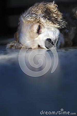 Free So Sleepy Stock Photo - 2752860