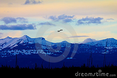 Soaring Bald Eagle Silhouette At Sunset