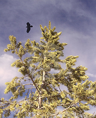 Soaring Eagle over Tree