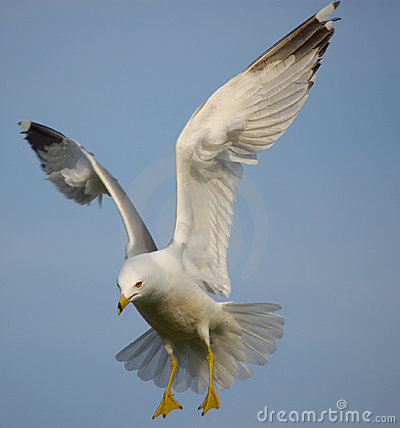Free Soaring Seagull Stock Images - 7913614