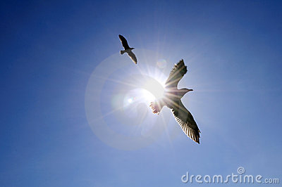 Soaring seagull in blue sky