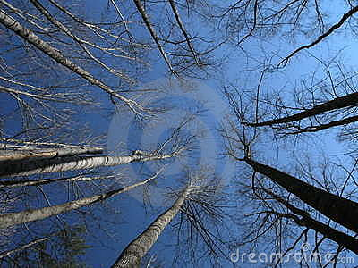 Soaring Trees