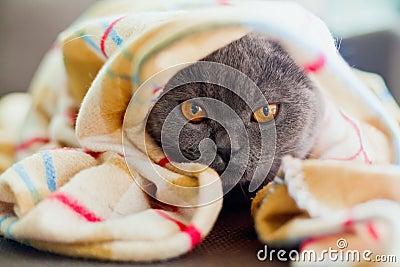 Sob o cobertor