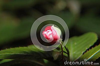 Sobre a la flor