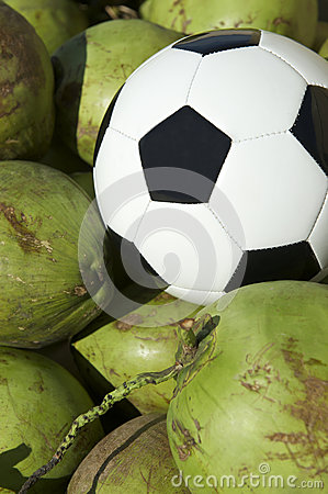 Soccer Ball Football Resting with Fresh Green Coconuts