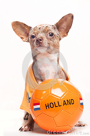 Soccer dog Holland ball