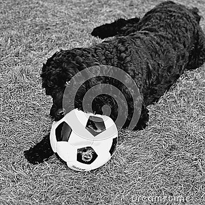 Free Soccer Hoodlum Royalty Free Stock Image - 4909026