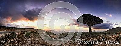 Socotra island sunset