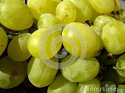 Soczyste winogron