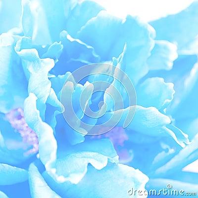 Soft blue floral background.