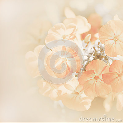 Soft blur background with flowers