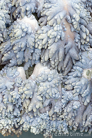 Soft coral texture