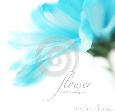 Soft focus flower background with copy space.