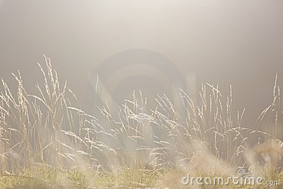Soft Morning Light nature background