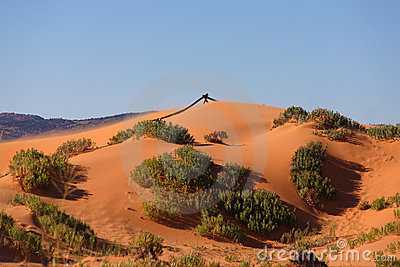 Soft pink sand dunes and hardy