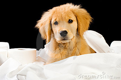 Soft puppy in toilet paper pile
