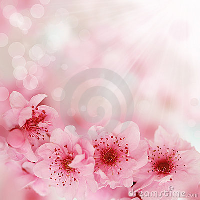 Free Soft Spring Cherry Flowers Background Stock Photography - 14392252