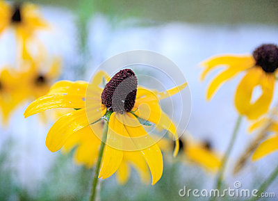 Soft wild flower background