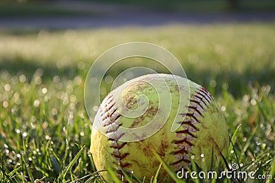 Softball in dewy grass