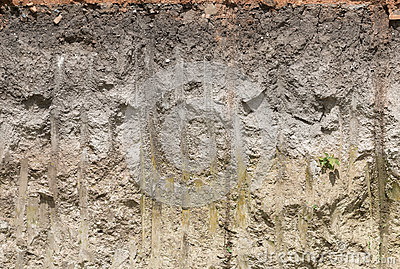 Soil Profile In Cross Section  Stock Image | CartoonDealer