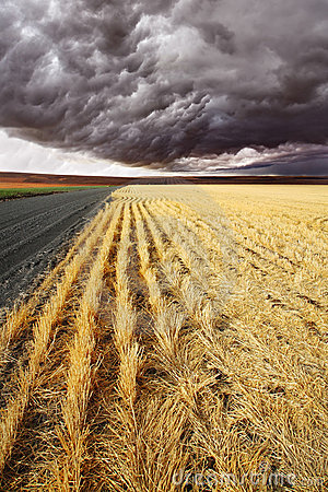 Free Soil Rural Road To Fields Of Montana. Royalty Free Stock Photos - 13903418