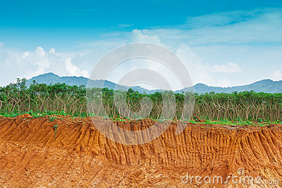 Soil under in cassava farm