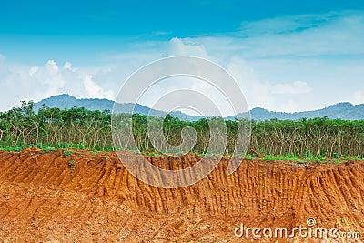 Soil under in cassava farm