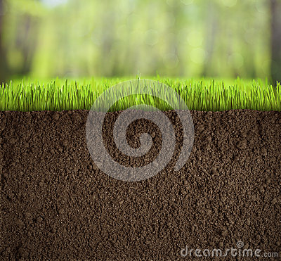 Free Soil Under Grass In Forest Stock Photos - 34346273