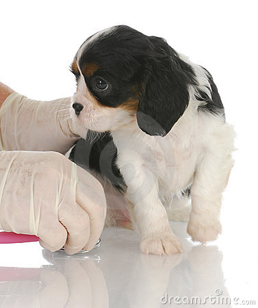 Soin vétérinaire