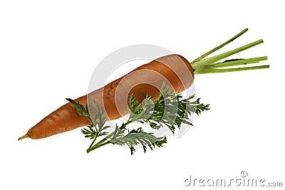 Sola zanahoria con la hoja