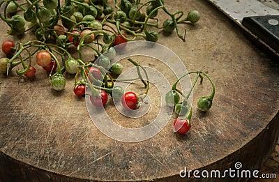 Solanum. Stock Photo