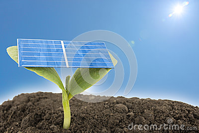 Solar cell on sprout