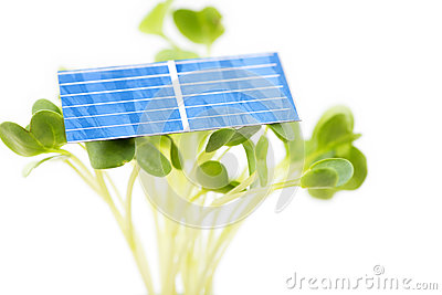Solar cell on sprouts