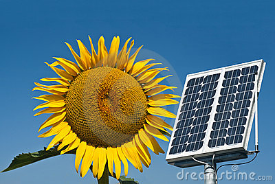Solar panel and sunflower, the future energy